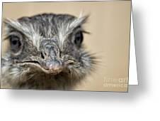 Emu Print 9052 Greeting Card