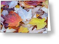End Of Autumn Greeting Card by David Millenheft