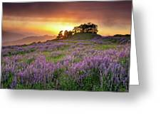 End Of Day Greeting Card by Jason Roberts