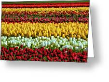 Endless Beautiful Tulip Fields Greeting Card
