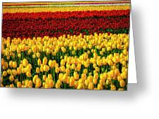 Endless Tulip Fields Greeting Card