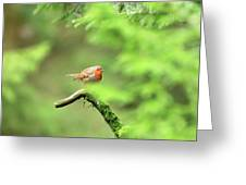 English Robin Erithacus Rubecula Greeting Card