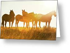 Equine Glow Greeting Card