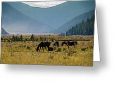 Equine Valley Greeting Card