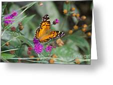 Equinox Butterfly  Greeting Card
