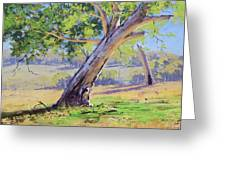 Eucalyptus Tree Australia Greeting Card