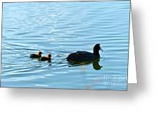 Eurasian Coot And Offspring In Ria Formosa. Algarve, Portugal Greeting Card