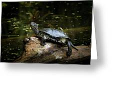 European Pond Turtle Sitting On A Trunk In A Pond Greeting Card