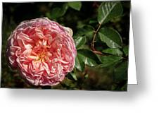 Evelyn Rose Greeting Card