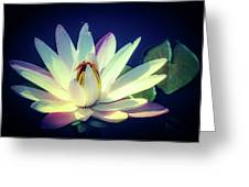 Evening Water Lily Greeting Card