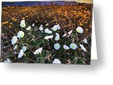 Evening With Primroses Greeting Card by Jason Roberts