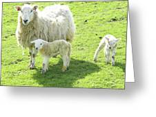 Ewe With Lambs Greeting Card