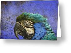 Blue Exotic Parrot- Pirates Of The Caribbean Greeting Card
