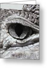 Eye Of Alligator Greeting Card