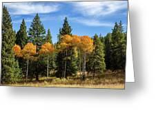 Fall Aspen Greeting Card by Michael Chatt