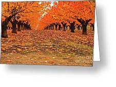 Fall Cherry Trees Greeting Card