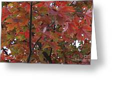 Fall Collage Greeting Card