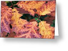 Fall Flames Greeting Card by Whitney Goodey