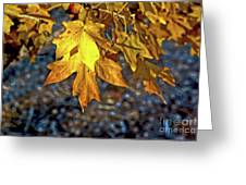 Fall Has Sprung Greeting Card