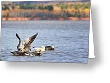 Fall Migration At Whittlesey Creek Greeting Card