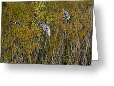 Fall Time Mallards Greeting Card