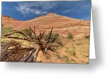 Fallen Tree Greeting Card