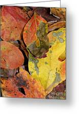 Falling Into Fall Greeting Card