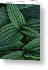 False Hellebore Plant Abstract Greeting Card