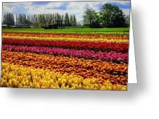 Farming Tulips Greeting Card