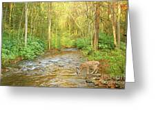 Fawn Drinking From Stream Greeting Card