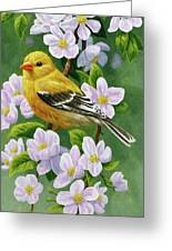 Female American Goldfinch And Apple Blossoms Greeting Card