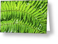 Fern Greeting Card by Nick Bywater