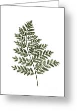 Fern Twig Illustration Grey Plant Watercolor Painting Greeting Card