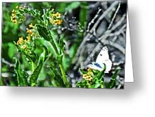 Fiddleneck And A White Butterfly In Joshua Tree National Park, California Greeting Card by Ruth Hager