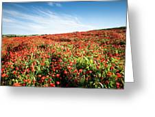 Field Full With Red  Poppy Anemone Flowers. Greeting Card by Michalakis Ppalis