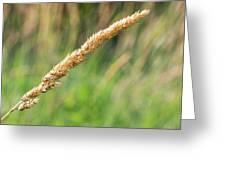Field Grass Greeting Card