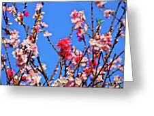 Pinks And Blues Greeting Card