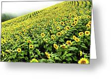 Fields Of Yellow Greeting Card by Shane Kelly