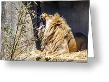 Fierce Yawn Greeting Card by Kate Brown
