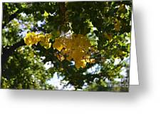First Golden Leaves Greeting Card
