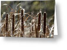 Five Cattails Greeting Card by Rob Huntley