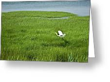 Salt Marsh Flight Greeting Card