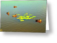Floating Ducks Greeting Card