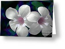 Floral Photo A030119 Greeting Card