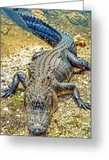 Florida Gator 2 Greeting Card