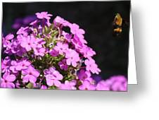 Flower And Bee Greeting Card