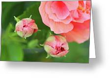 Flower Buds Rising Greeting Card