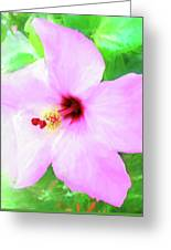 Flowers Of Florida I Greeting Card