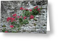 Flowers On Stone Greeting Card