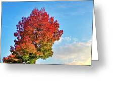 Foliage In Flanders Greeting Card